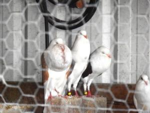 Pigeons...don't serve a purpose.