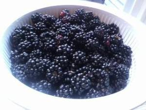 So many blackberries!!