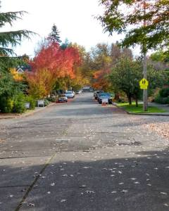 Marsya's picture of our neighborhood in all its fall glory...before the rain started