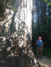 Bigggggg trees