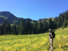 First alpine meadow