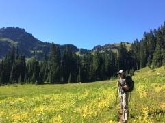 First alpine meadow