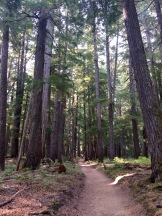 Beautiful trail and forest