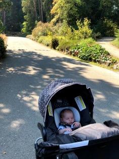 Walks in the Arboretum